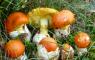 funghi_contin